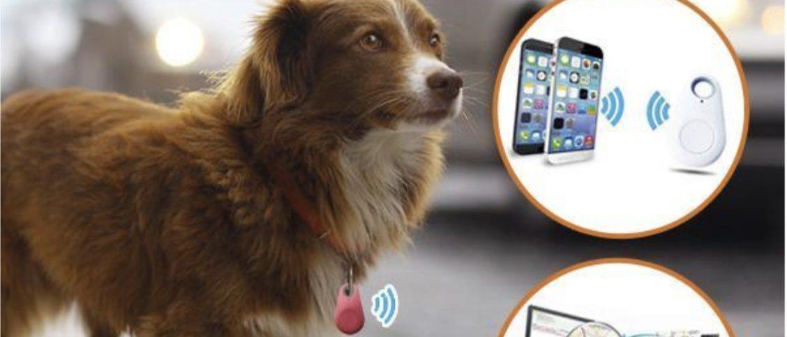 médaille pour chien GPS